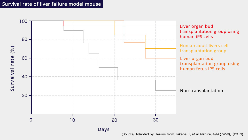 Survival rate of liver failure model mouse